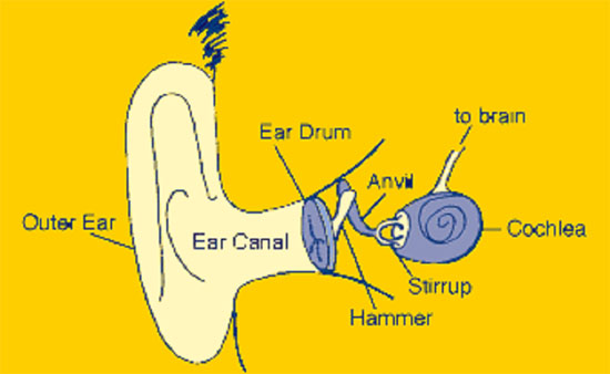 Elcosh oshas approach to noise exposure in construction ear diagram ccuart Image collections