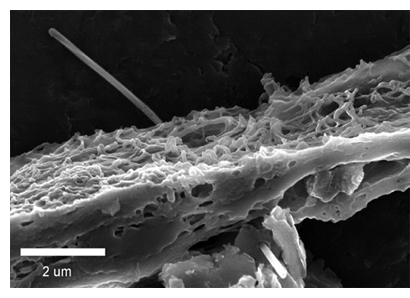 photo of a multi-walled carbon nanotube penetrating the lung