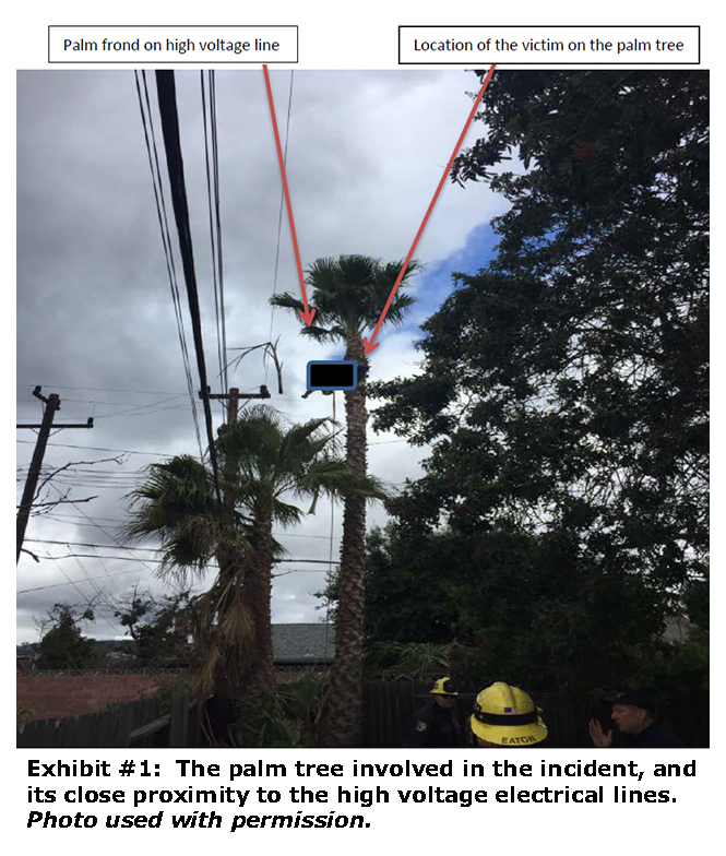 eLCOSH : A Tree Trimmer is Electrocuted While Trimming a Palm Tree