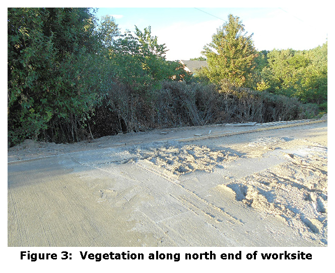 Figure 3: Vegetation along north end of worksite